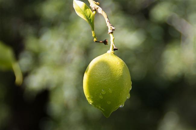 Dieta MINUNE cu lămâie: 7 zile pentru o mărime mai mică la blugi (MENIU complet)