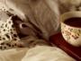 cafea inainte de culcare
