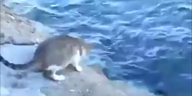 pisica pescar