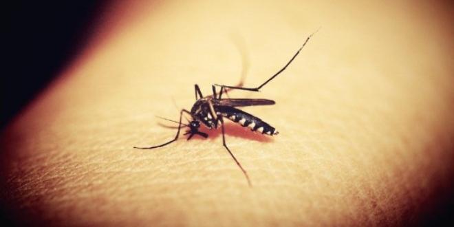 ţânţarii