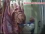 carne de vita bolnava polonia