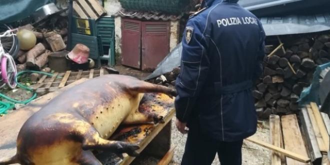 porc italia